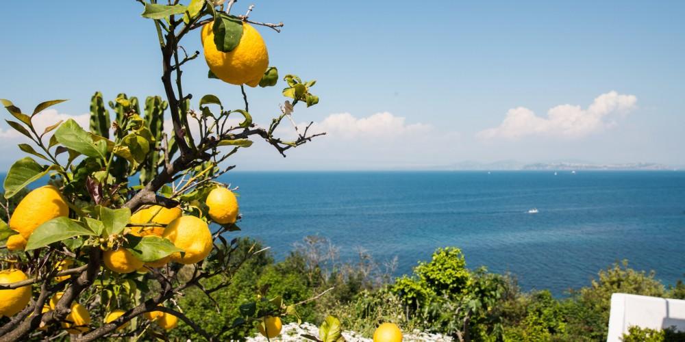 limoni ischia